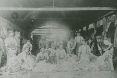 000949 Sheep shearing c1900
