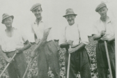 000761 Sid Male, Ray England, Fred Male & one other hoeing 1947