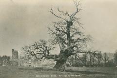 000881 Monmouth Tree c1900